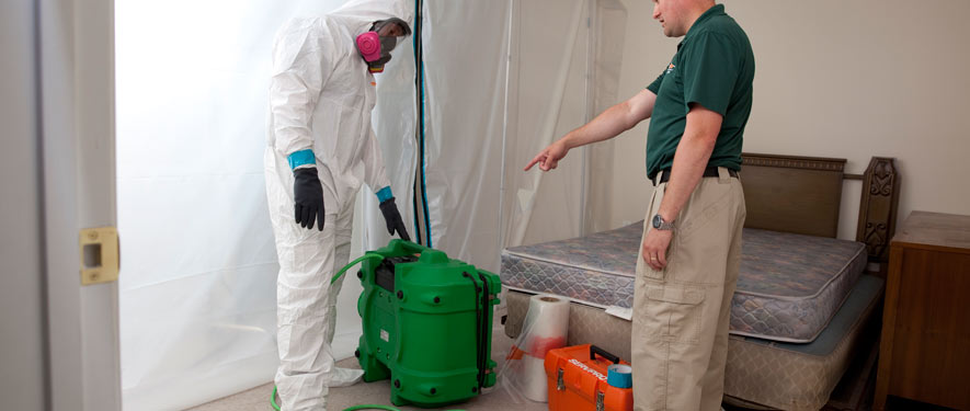 Wilmington, CA mold removal process